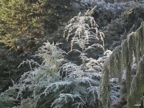 koniec lutego.... wreszcie trochę słońca! #zima #przyroda #ogród