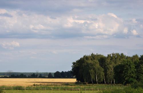 szuflada: z wypadów nad Odrę, nadodrzańskie pola i łąki :)