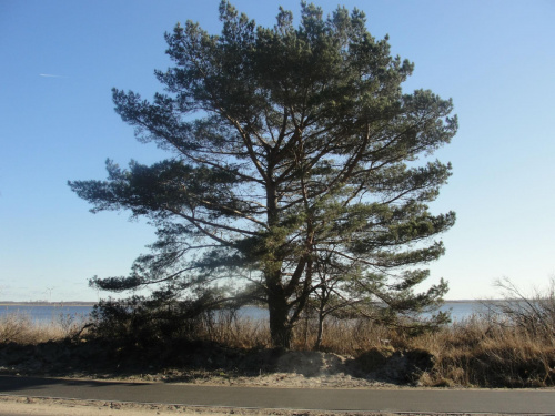 #Dźwirzyno #las #luty #morze #zima