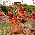 pachnie wiosną :)) #krzewy #kwiaty #oczary #przedwiośnie #WParku