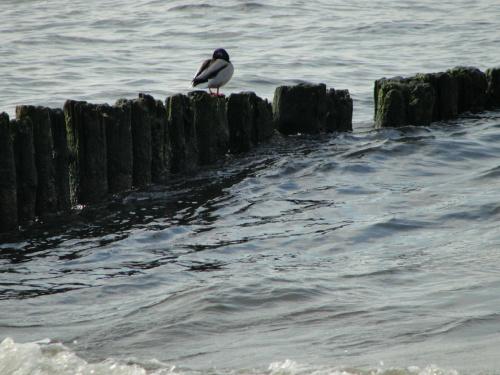 #morze #Mrzeżyno #plaża #wiosna