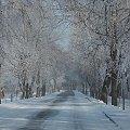 Przedwiosnie 2013 #Gągoły #Łomża #Narew #Przedwiośnie #Szczygieł
