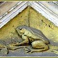ul.......numer pod żabą #bramy #zwierzęta