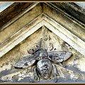 pod pszczołą #bramy #zwierzęta