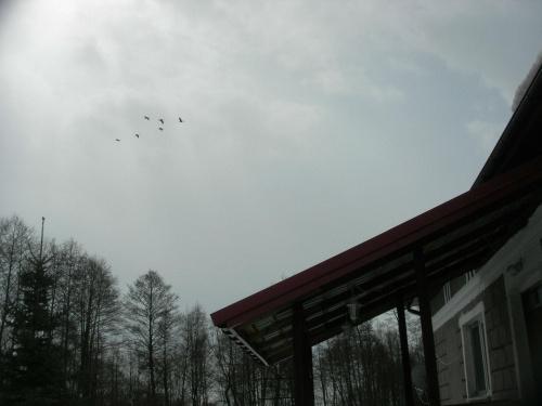 Świeża dostawa bocianów #bocian #staw #wiosna