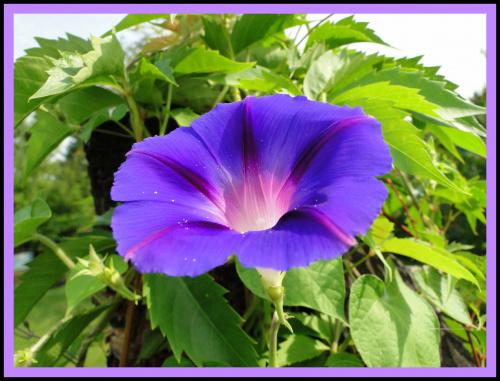 Dla Jagab w dniu Urodzin: życzę Ci samych pięknych chwil w życiu,niech Twe serce na deszczu nie zmoknie, motyli,bzów i kwiatów w snach!