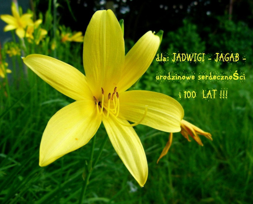 Szczęście jest jak motyl: kiedy usiłujesz je złapać, zawsze wymyka Ci się z rąk … ale jeśli cichutko usiądziesz, to może samo do Ciebie przyleci … … i tego szczerze Ci życzę … :) **** ulub. jagab **** #kwiaty #lato #liliowce #ogród