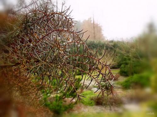 #ogród #przyroda #wiosna