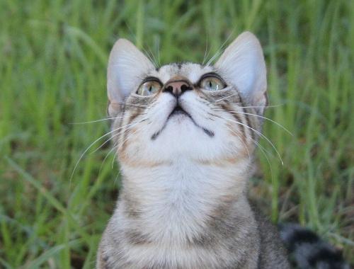 co tam w górze... #kot