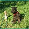 Rejs 2010 #Mazury #pies #wakacje #Zibi #żeglarstwo