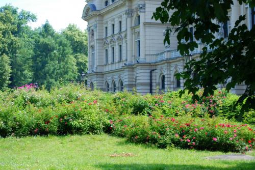 Róże wokół Teatru Słowackiego w Krakowie