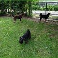 Zalew Zegrzyński 06.2013 #pies #sznaucer #zalew #żagle #żeglarstwo