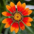 Kwiatek... #arietiss #flora #kwiat #natura