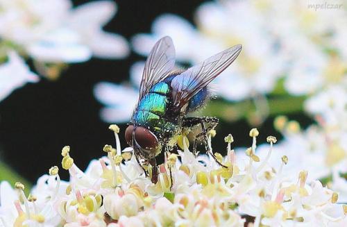 Dobry pyłek !!!