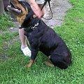 Galia może umrzeć bez pomocy #adopcja #fundacja #hodowla #pies #psy #rottka #rottweiler