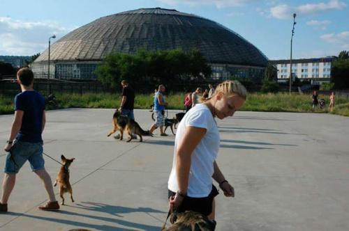 Farrida i Bonus pierwsze szkolenie #rottka #fundacja #hodowla #adopcja #pies #psy