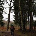 poświąteczny, zimowy (?) spacer :) #grudzień #las