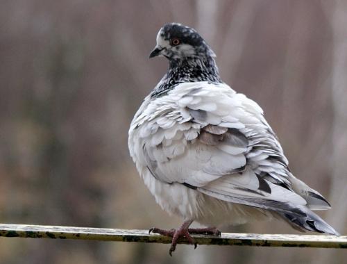 moi balkonowi goście ... dokarmiam te małe, ale te duże też są stałymi bywalcami ... :) #gołębie #NaBalkonie #ptaki #zima