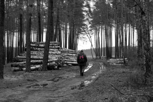 #las #natura #styczeń