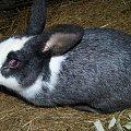 zjedzone #króle #królik #króliki