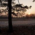 #zima #luty #pola #las