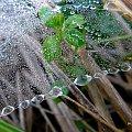 tak sobie wspominam :)) **** ulub. danusialuban **** #deszcz #jesień #kropelki #pajęczyna #rosa