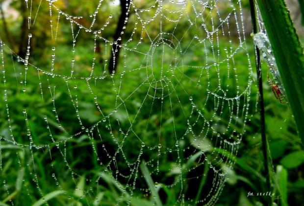 tak sobie wspominam :)) #deszcz #jesień #kropelki #pajęczyna #rosa