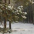 to już wspomnienia... :) #las #luty #zima
