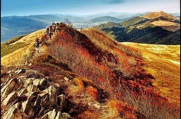 bieszczadzka jarzębina #góry #krajobraz