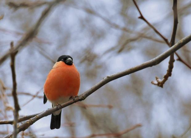 #ptaki #ogrody #natura #zima