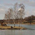 #luty #zalew #drzewa #brzozy