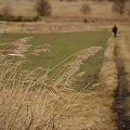 #pola #trawy #luty